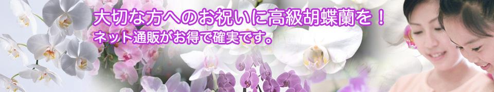header_ran.jpg